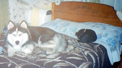 On Bed: Maggie, Chakotae; Cat = Piggy, The BirdMicester of Wesport