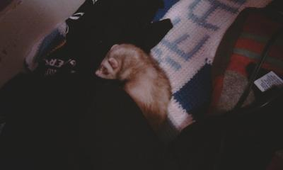 You slept a lot, just like a ferret should
