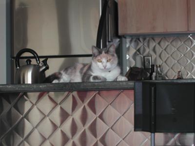 Naya in My Pittsburgh Apartment