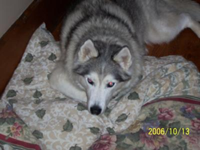 My Boy Blue - December 19, 1994 - September 8, 2009