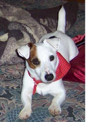 Bailey's adoption photo