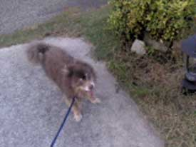 Loved To Go Walking With Him