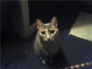 Zena, my lil bud 1991-2009