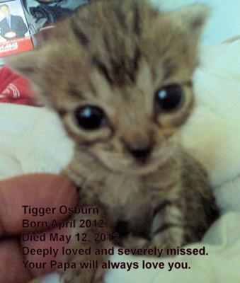 My boy Tigger