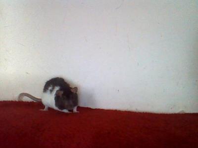 My Tiny Tim