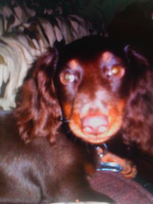 Copper September 17, 2012