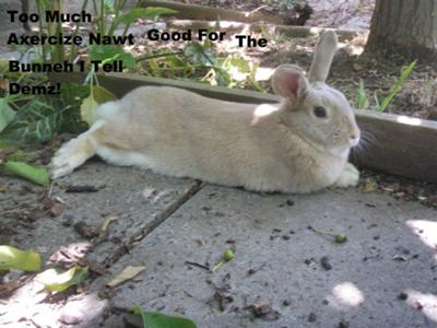 Have a rest, Thumps..