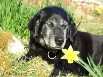 Buttons and a beautiful daffodil