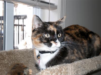 My Beautiful Lily ~ Set Free - May 25, 2009