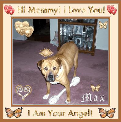 My Sweet Angel Max