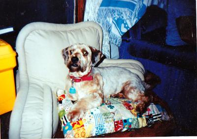 Wokka stumbled into our lives on Labor Day with a heavily matted coat and never left, until he passed away...