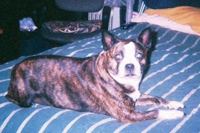 My Precious Tuffy, 2005-2010