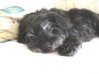 Our Little Angel Lindsay - 1994 -2009