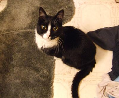 Abby (July 20, 1996 - October 22, 2008)