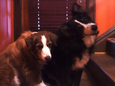 Bailey & Sister Tessa