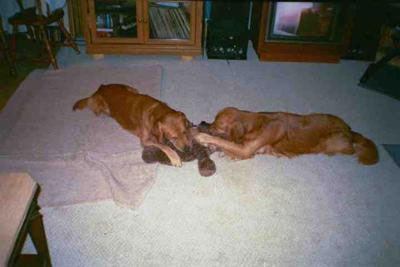 Benttail and his brother (Sampson) who both passed of liver cancer