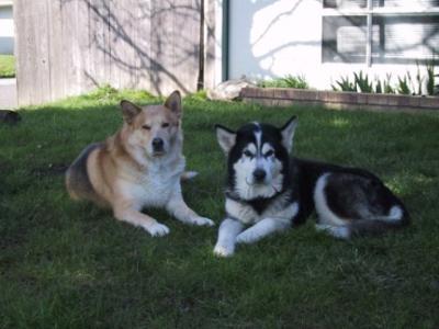 Mogul (L) & Chaya (R)