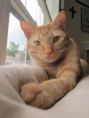 Jasper 03/09/2009 - 04/15/2011