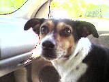 Levi in the car on the way to the beach