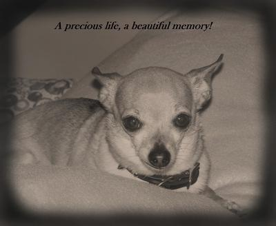 Farewell Peewee<br><br>                  July 24 1999 – July 6 2012